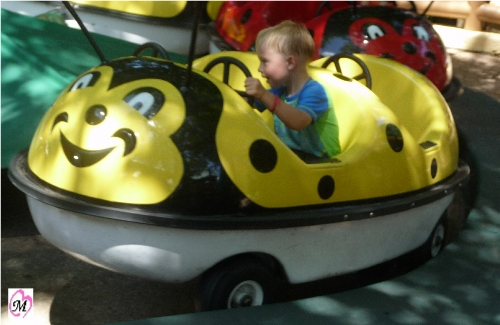 Kid Lady Bug Ride